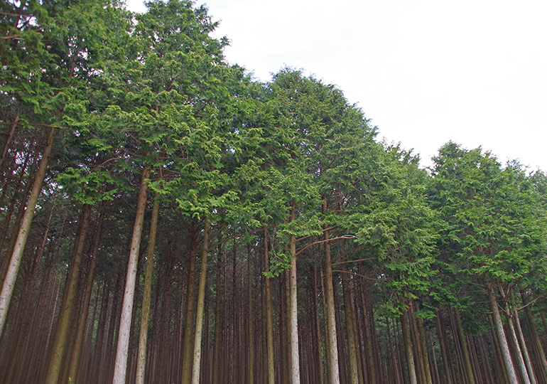 再生可能な天然資源